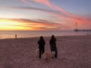 Guests-Dogs-Sunsets